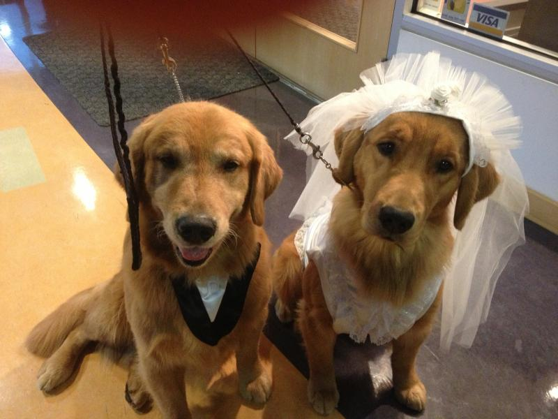 Breaker (groom) & Naughty (bride) at a Bridal Show - 2012