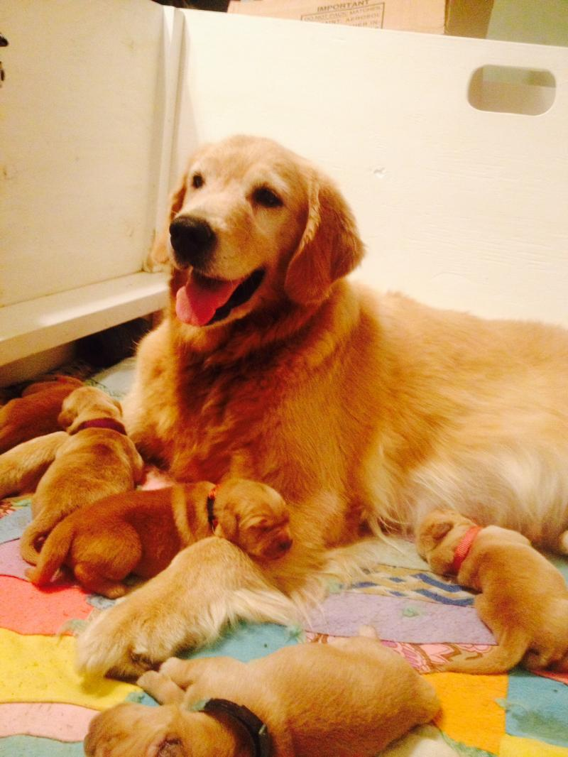 Proud Mamma with her new puppies