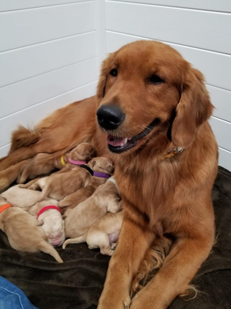 Journey with newborn pups